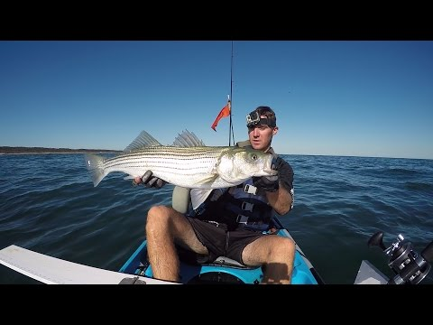 """September 24 Hour Kayak Fishing Challenge. Striped Bass, Albie's, Bluefish, Carp and MORE! 159"""""""