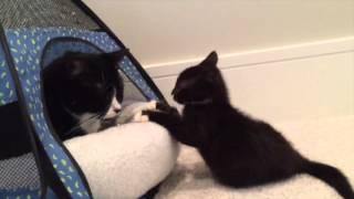 Miracle Kitten Cassidy thumbnail