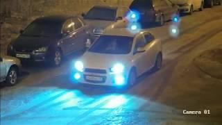 Убийство собаки Воронеж, 24 февраля 2019