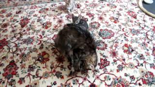 Кормление котов