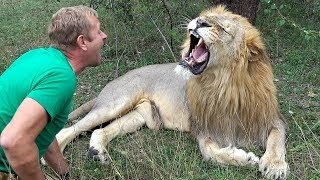 DANGEROUS GAMES WITH LIONS / Taigan Safari Park