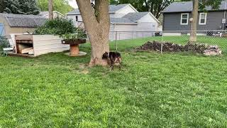 SEPR Helios playing in the yard