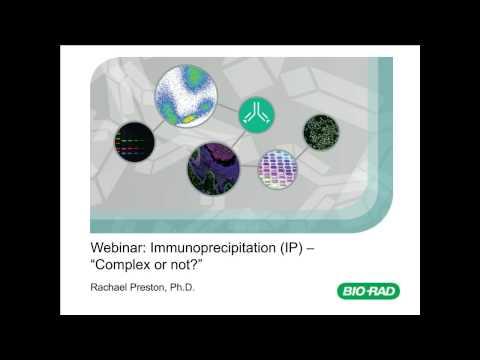 Immunoprecipitation (IP): Complex Or Not?