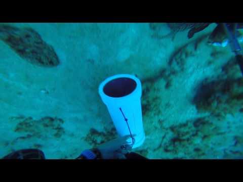 Jupiter Florida Spearfishing