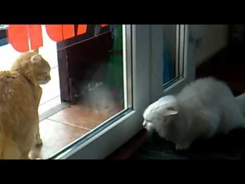 Породы кошек с фотографиями, видео и описанием. Питомники