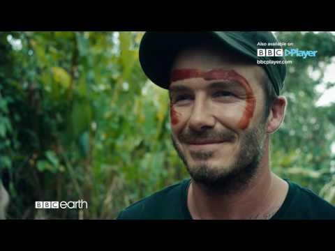 David Beckham Into The Unknown  BBC Player