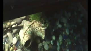 профилактика болезней рыбок.синька в аквариум