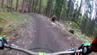 Bär auf dem Bikepark Malino Brdo SLOWAKEI
