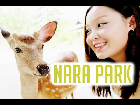 OSAKA, JAPAN TRAVEL VLOG: Nara Park, Osaka Castle, Osaka Aquarium Kaiyukan
