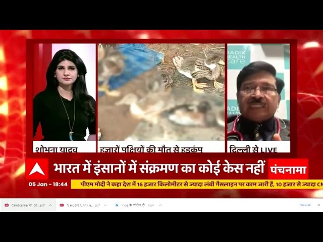 Bird flu - how much danger to humans? Dr. Ravi Malik on ABP News