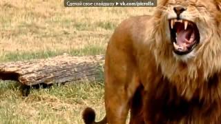 «интересные факты о домашних и диких животных» под музыку Скуби Ду   ахах  Picrolla