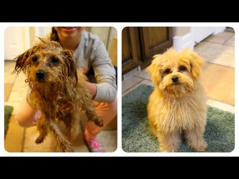 braidy-bath-night-|-puppy-hygiene-|-cute-girls-hairstyles