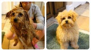 Braidy Bath Night | Puppy Hygiene | Cute Girls Hairstyles
