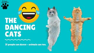 The Dancing Cats | The Dancing Animals Channel Series  Dancing cats