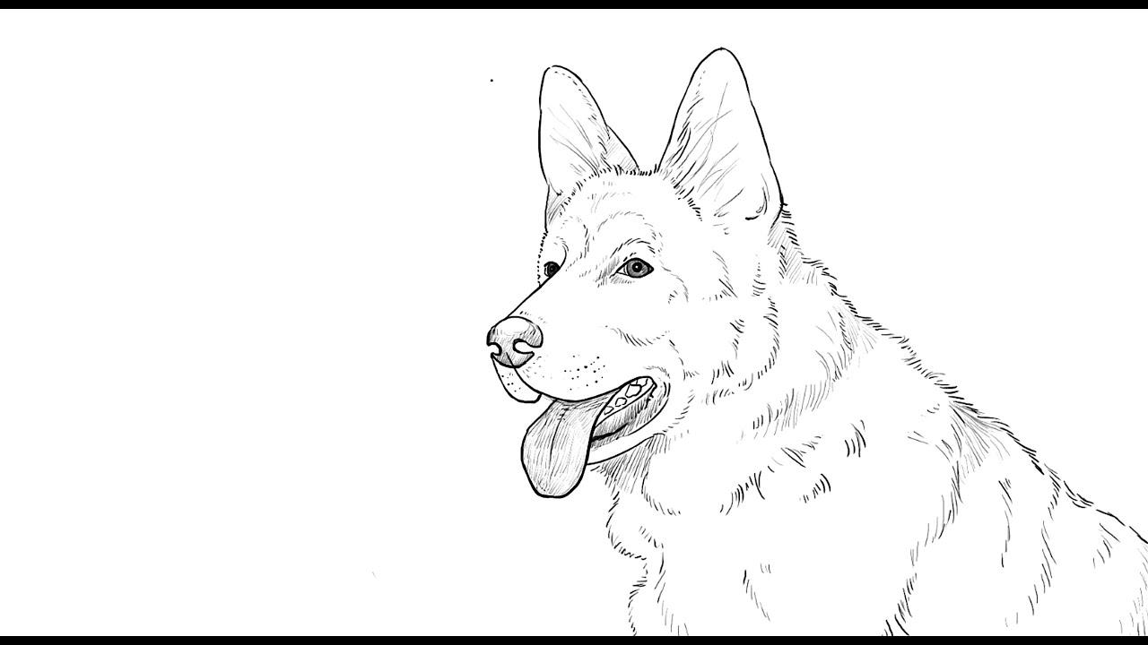 How To Draw German Shepherd Dog