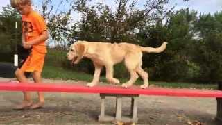 Daisy, A Fun Labradoodle Puppy!