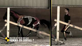 Peut-on sauter un obstacle comme un cheval ? - On n'est pas que des cobayes #cobayesF5