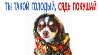 Приколы и Мемы с Котами и Собаками  МЕМЧИКИ про Котов и Собак