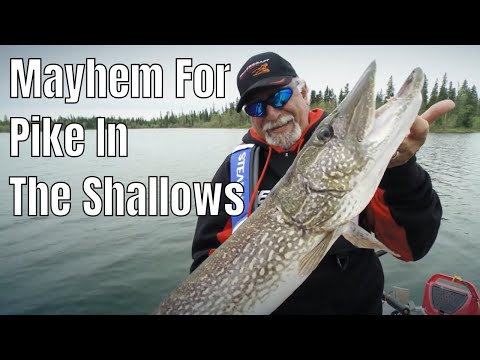 Absolute Mayhem For Pike In The Shallows | Fish'n Canada
