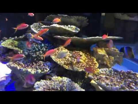 竹島 水族館
