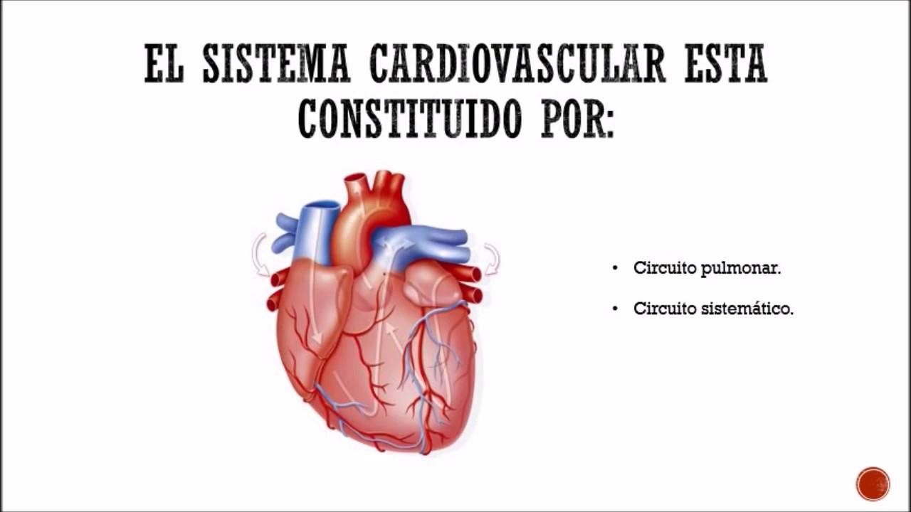 SISTEMA CIRCULATORIO - Histología / UCATECI - YouTube