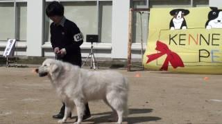 2009/11/1 日本獣医生命科学大学ペットショーにて.