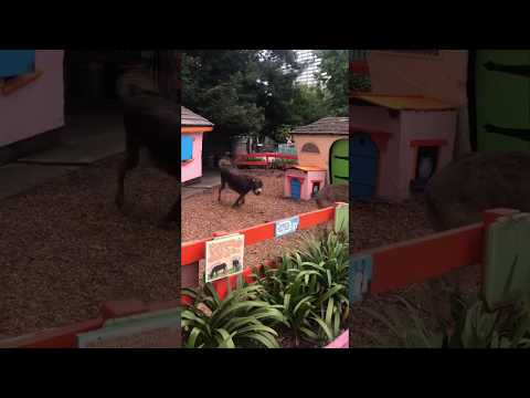 Fairyland donkeys react to classical music