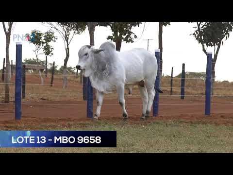 LOTE 13 - MBO9658 - NELORE