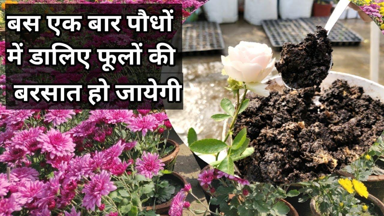 मैं गारंटी लेता हूँ, बस एक बार पौधों में डालिए फूलों की बरसात ना हो जाए तो नाम बदल देना