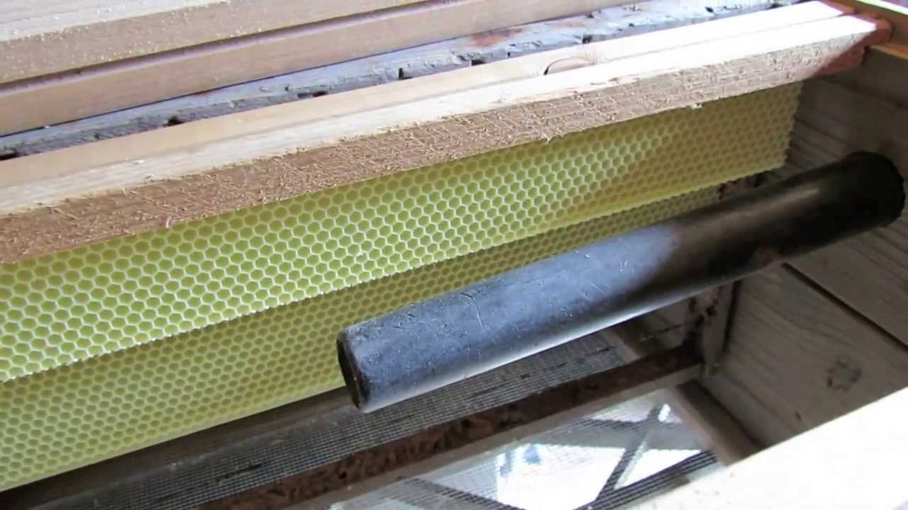 Making And Setting A Honey Bee Trap Out Hive Box