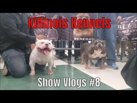 KILLINOIS KENNELS SHOW VLOG#8 BRC GLOBAL CHICAGO,IL AMERICAN BULLY/EXOTIC BULLY DOG SHOW