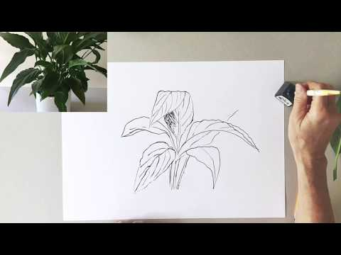 Pflanzen Zeichnen Für Kinder Ab 10 Jahren Und Erwachsene Anfänger Lektion 9