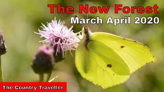 The New Forest in March and April 2020