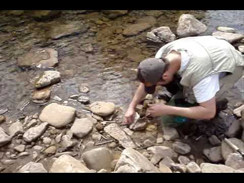 Trout fishing cranberry river march 2009 youtube for West virginia out of state fishing license