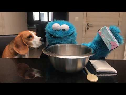 Funny dogs Vs Cookiemonster DIY Dog Cookies : Funny Dogs Louie and Marie