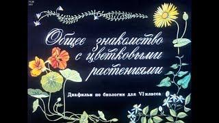 Диафильм Общее знакомство с цветковыми растениями /по биологии для 6 класса/