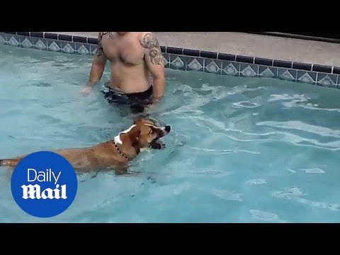 Owner teaches dog how to swim - Daily Mail