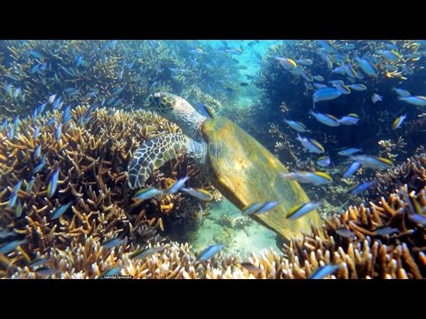 The Sea & Me: Australia's Extraordinary Ocean Guardians