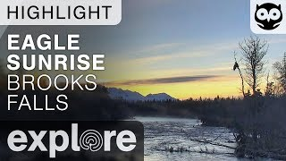 Bald Eagle Pair Watch The Sunrise - Brown Bears Live Cam Highlight 10/20/17