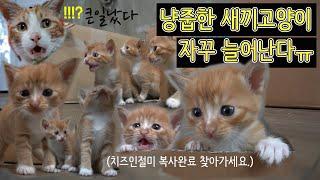 냥줍한 아기고양이 복사하기. 고양이 자판기. 치즈 인절…