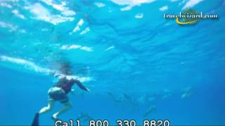 Hawaii Free Diving with Dolphins