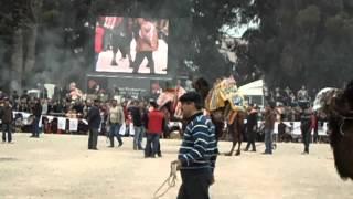 11.Mart.2012 BAYRAKLI 2.GELENEKSEL DEVE GÜREŞİ FESTİVALİ