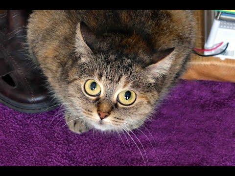 Как удалить запах мочи кошки с дивана, пола, ковра, и даже из ботинка!