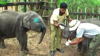 Baby Elephant found human heroes to save him from Hakka Patas Trap
