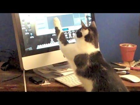 Cat-at-Work