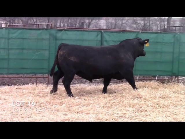 Taliaferro Angus \u0026 T Bar T Angus Ranch - 16