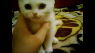 котята любят ласку и нежность...
