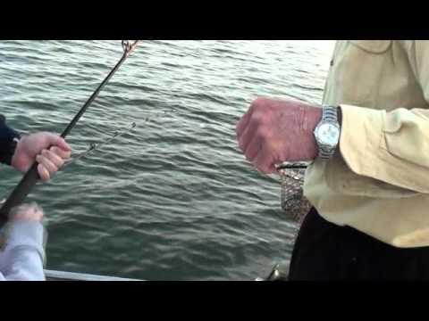 Beaver lake striper fishing youtube for Beaver lake arkansas fishing report