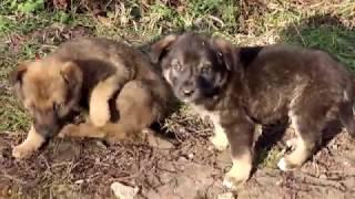 Милые смешные щенки