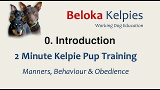 INTRODUCTION: 2 MIN Kelpie Pup Training